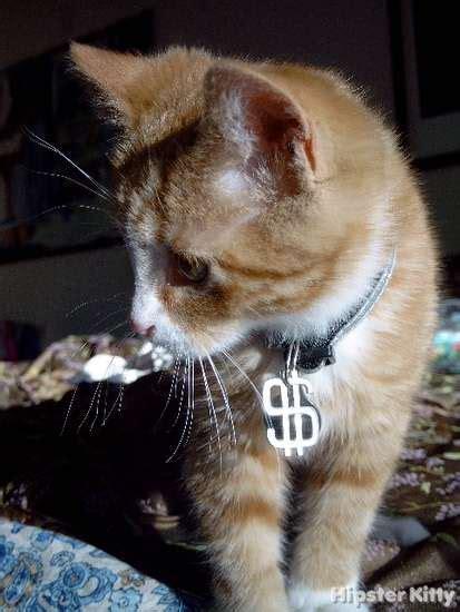 thug kitten hipster kitty