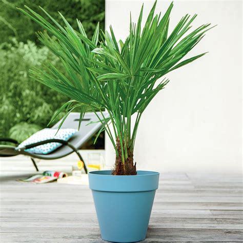 palmier exterieur