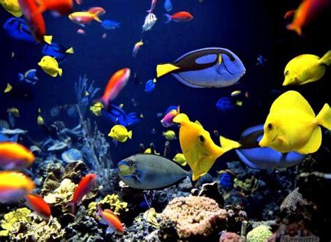 fish wallpaper 35 beautiful freshwater tropical fish pictures Tropical