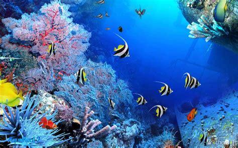 wallpaper pemandangan dasar laut wallpaper ikan laut