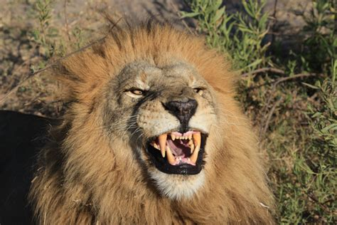 trophy hunting unethical namibian hunters  blame