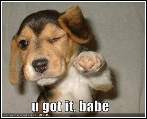 Dogs That Dont Shed For Adoption by Funny Dog Pictures Unbound State Humor Funny