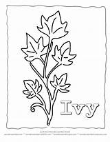 Template Ivy Leaf Coloring Leaves Pages Drawing Printable Templates Drawings Plant Sheets Crafts Outlines Wonderweirded Plants Wildlife Bank Result Popular sketch template