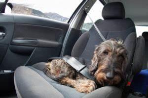 Hundehaltung Mietwohnung 2017 : hundehaltung in der mietwohnung tierschutz tierhaltung ~ Lizthompson.info Haus und Dekorationen
