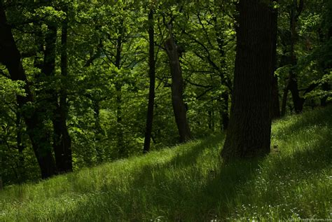 Green Forest Photo by Forest Wallpapers Hd