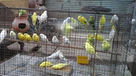 bird shop in local market asansol west bengal india