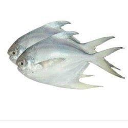 pomfret fish  hyderabad latest price mandi rates