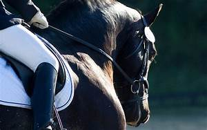 Centerline Events Dressage Show Management