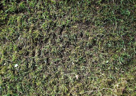 Nach Dem Vertikutieren by Rasen Vertikutieren