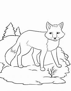 Winter Animals Hibernation Coloring Pages Coloring Pages