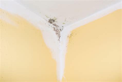 stockflecken aus stoff entfernen schimmel oder stockflecken 187 wo liegen die unterschiede