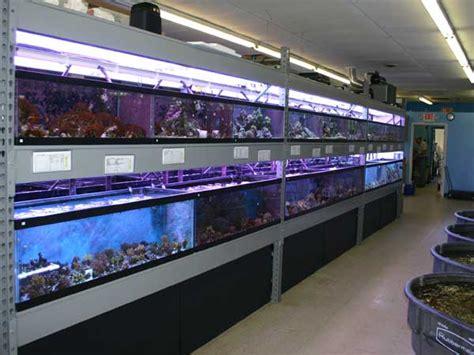 salty critter saltwater aquarium store in vermilion ohio 30 minutes west of cleveland