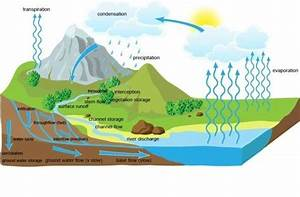 The Hydrological    Water Cycle