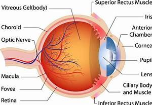 Can You Name The Parts Of The Eye  Do You Know How Each