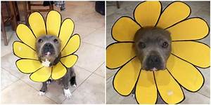 Creative Mom Turns Dog's Cone of Shame Into A Sunflower