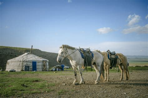 mongolia horse nomadic culture horses domestic chronology precision sheds origins light contemporary credit form center mongol heritagedaily early archaeology eurasian