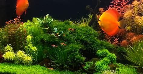 replace water   fish tank aquarium adviser