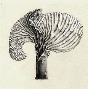 Scientific Illustration: Coral Cactus on Behance