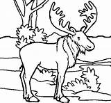 Moose Coloring Pages Printable Getcolorings sketch template