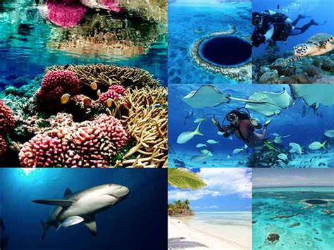 Best Place To Scuba Dive by Best Scuba Diving In The World Top 12 Best Places To