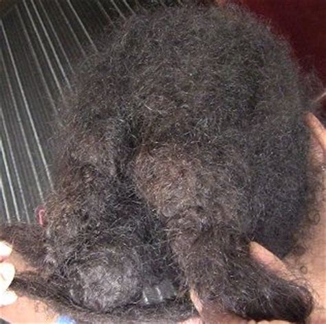 how to detangle matted hair 1000 images about how to detangle tangled matted hair