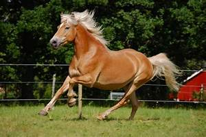 Top 10 Most Beautiful Horses in the World