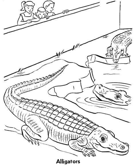 alligator  animaux coloriages  imprimer