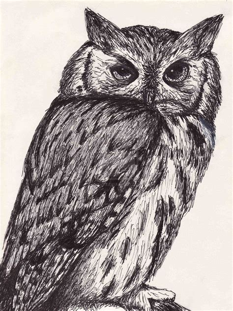 animal ink drawings   ink drawings  animals