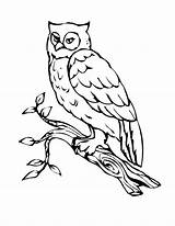 Owl Coloring Pages Bird Birds Printable Outline sketch template