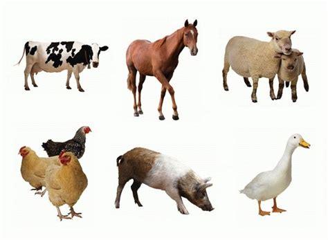 farm animals cut outs farm animals cut outs