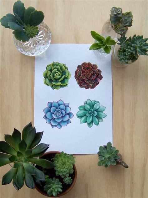 drawing succulents cacti succulents pinterest