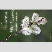 Japanese callig...
