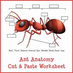 Ant Anatomy Cut  U0026 Paste Worksheet