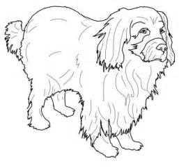 newfoundland coloring page super coloring