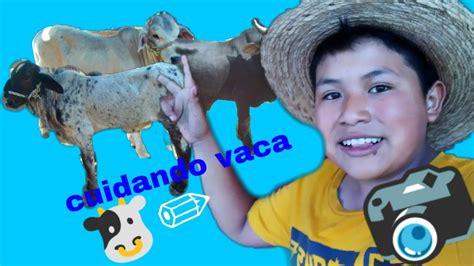 Cuidando Vaca Youtube