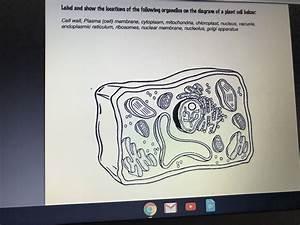 31 Read Answer Color Label Mitochondria