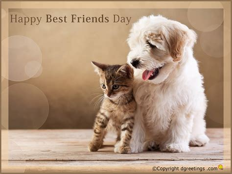 Happy Wallpaper Cats And Dogs by 45 Beautiful Best Friends Day Wish Pictures To With