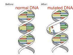 Modification Utation by Genetically Engineered Food Definition Food Ideas