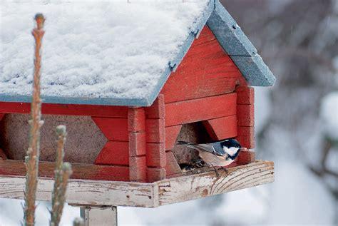 tout ce qu il faut savoir pour aider les oiseaux 224 passer l hiver d 233 tente jardin