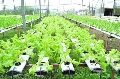 setup  hydroponic garden   backyard visihow