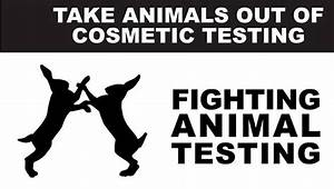 Makeup that doesn t test on animals  Makeup
