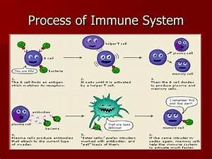 Hiv, Aids, & Your Immune System, Sped 554 Immune System/AIDS