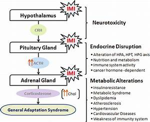 Imidacloprid Exposure Affects The Hypothalamic