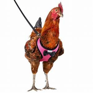 Chicken Harness And Leash