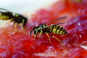 Was Essen Wespen : txn p ob marmeladenbrot oder grillbuffet wo menschen im freien essen sind wespen meist nicht ~ Frokenaadalensverden.com Haus und Dekorationen
