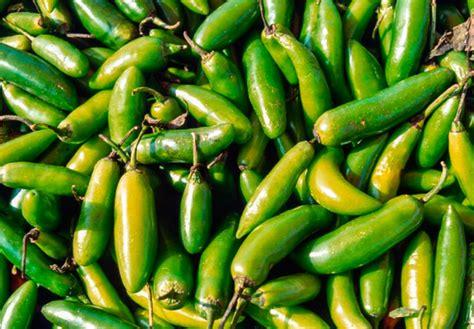 México, el país de los 64 chiles - Animal Gourmet