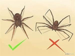 382 best images about Spiders on Pinterest   Huntsman ...