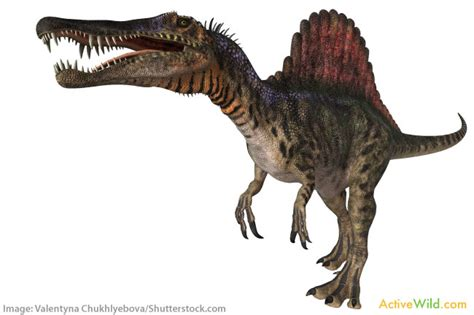 Dinosaur Names With Pictures & Information