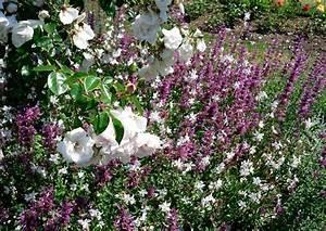 Kletterrose New Dawn : new dawn hochstammrose mit unterpflanzung ~ Michelbontemps.com Haus und Dekorationen