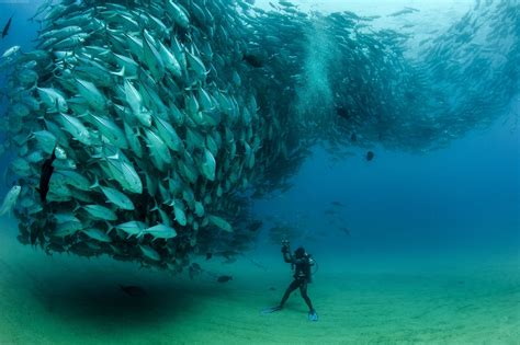 nature fish photography photographers sea wallpapers
